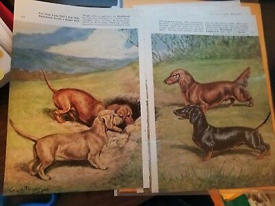 PAIR of Edwin Megargee Dachshund bookplates 1958 National Geographic Mag