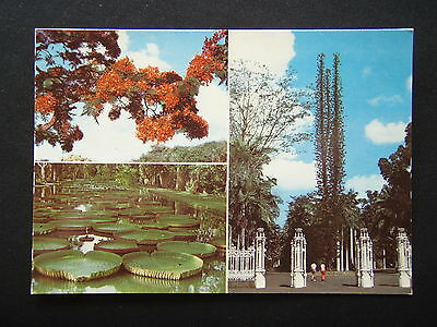 Mauritius Botanical Garden Pamplemoisses Flame Flowers Water Lily Postcard