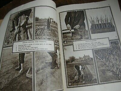 VINTAGE  The Vegetable Garden Displayed RHS Guide 1952 EDITION FREEPOST