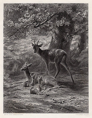"""Rosa BONHEUR 1800s Engraving """"The Doe and her two Young Ones"""" SIGNED Framed COA"""