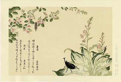 "Very Lovely UTAMARO Japanese ukiyo-e woodblock reprint: ""BEETLE & BAGWORM"""
