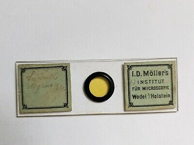 Fine Antique Victorian  Microscope Slide Diatoms By I.d. Moller's