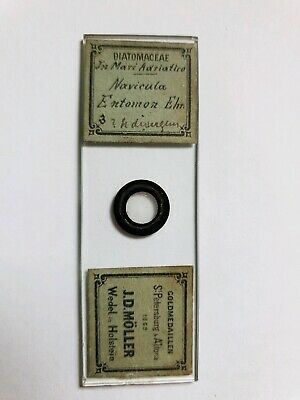 "Fine Antique Victorian  Microscope Slide Diatoms""Adriatic"" By J.d. Moller"
