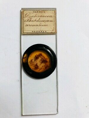 "Fine Antique Victorian  Microscope Slide Diatoms By ""Norman"""