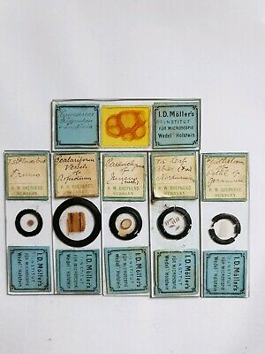 Fine Group Of 6 Victorian  Microscope Slides Botanical By I.d. Moller's