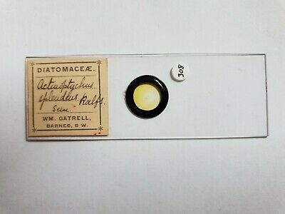 Fine Antique Victorian  Microscope Slide Diatoms Arranged By William Gatrell