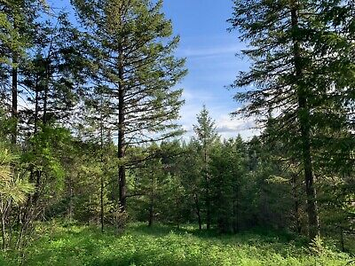 10 Acres Northeast Washington Electric And Huge Tall Trees Loon Lake Springdale