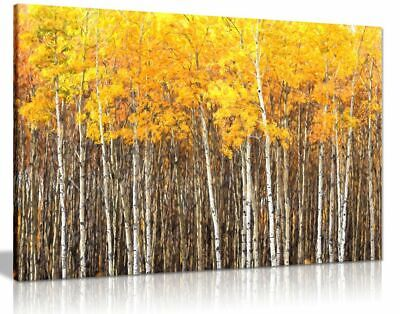 Yellow Grey Aspen Trees Forest Nature Oil Painting Canvas Wall Art Picture Print