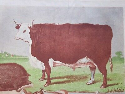 1858 Lithograph Print Thorley Cow Food Smithfield Show Pig Hereford Ox Bingley