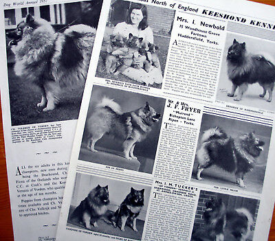 KEESHOND DOG KENNEL CLIPPINGS 1930s - 1950s x 35