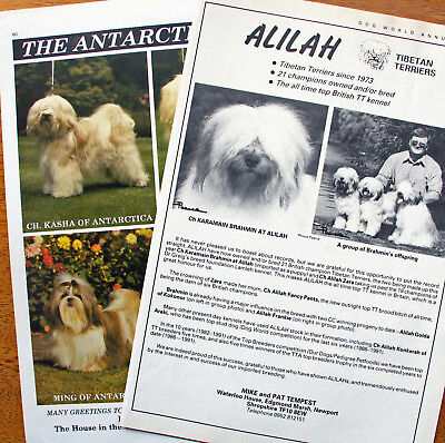 TIBETAN TERRIER DOG KENNEL CLIPPINGS 1930s - 2010s x 35
