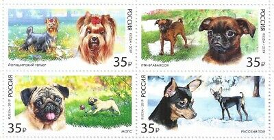 Russia 2019 Set ** Toy Dogs
