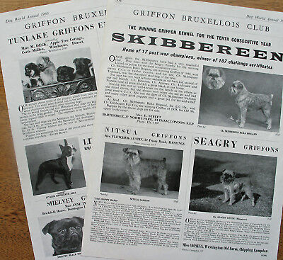 GRIFFON BRUXELLOIS  DOG KENNEL CLIPPINGS 1960s -2000s x 40