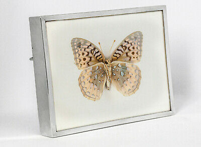 Antique silver frame, London 1903 with genuine butterfly (taxidermy)