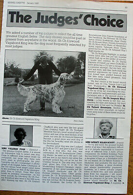 ENGLISH SETTER DOG KENNEL CLIPPINGS 1990s - 10s incl Judges Choice art.  x 35