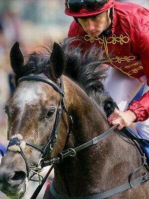Strong favourites horse racing system