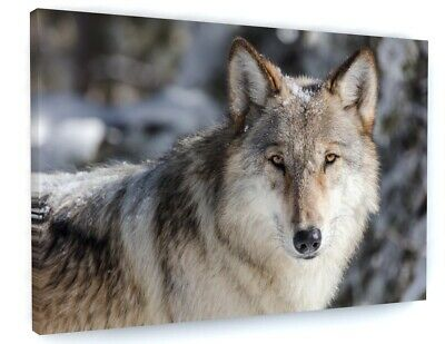 White Wolf Animal Canvas Picture Print Wall Art D42