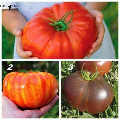 100pcs Home Gardening Giant Tomato Seeds Vegetable Organic Heirloom H1PS