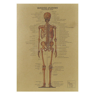 Hot Sale! The Human Skeleton Photo Picture Anatomy Skeletal System Human Poster