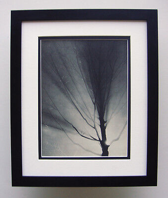 "Unbelievable BRASSAI Antique 1930s Photogravure ""Tree Study"" GALLERY FRAMED COA"