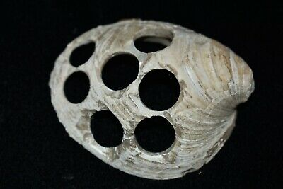 "3"" Awesome 1890s Historic Shell Button Bead Blank Lagrange Missouri I12"