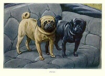PUGS BLACK /& FAWN Rubber Backed Coasters #0655 PUG