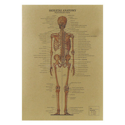 The Human Skeleton Photo Picture Anatomy Skeletal System Human Poster Special