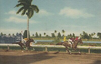 Lot of 5 Postcards Horse Racing Florida