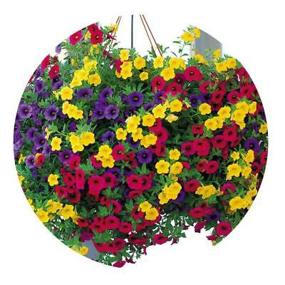200Pcs Mixed Colors Hanging Petunia Flower Seeds Balcony Bonsai Calibrachoa Hot