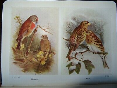 1919 Birds Of The British Isles & Their Eggs By Coward Ornithology 159 Plts^