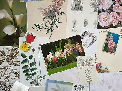 vintage paper floral flowers botanical images for art craft collage journal
