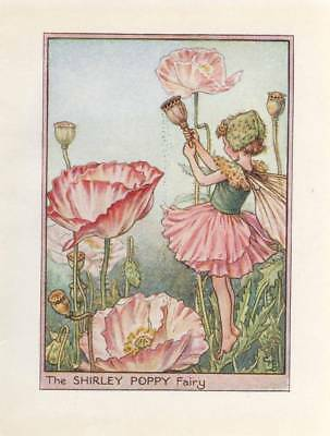 Shirley poppy flower fairy inspired by CM Barker ACEO Limited Edition