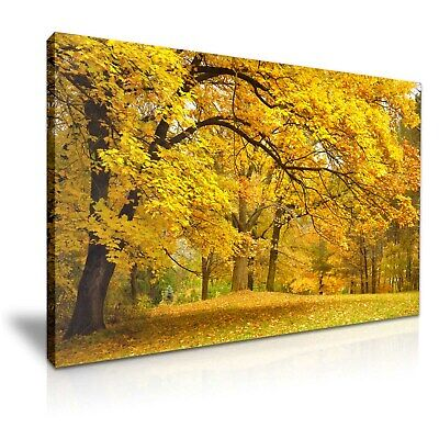 Autumn Forest Yellow Trees Stretched Canvas 76x50cm / 30X20 Inch