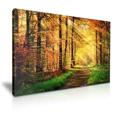 Autumn Red Yellow Forest Path Stretched Canvas 76x50cm / 30X20 Inch