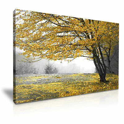 Large Tree Yellow Leaves Landscape Stretched Canvas 76x50cm / 30X20 Inch