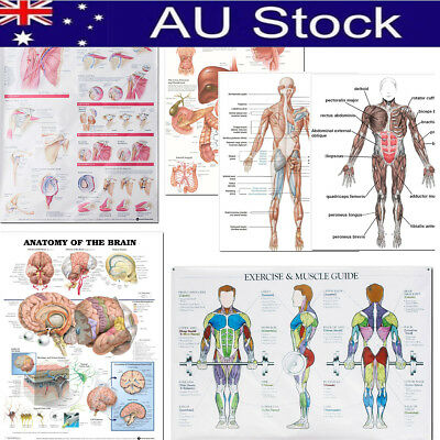 5 Types Human Anatomy Brain Muscles Poster Anatomical Chart Human Body Midcal