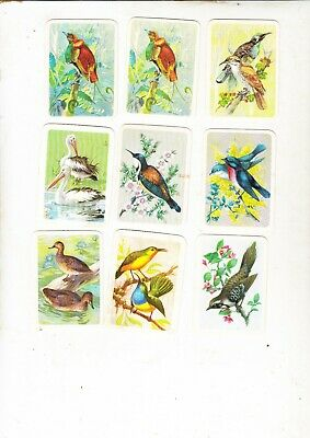 Tuckfields Australiana Bird Studies Cards