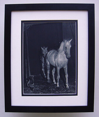 "Awesome 1930s BRASSAI Antique Photogravure ""The Horse Stable"" GALLERY FRAMED COA"