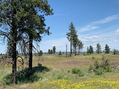 20 Acres Northeast Washington Lincoln County Spokane Area Borders Blm Land