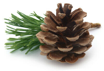 Perfect Pinecones (5-pack) - Craft, Floral, Christmas