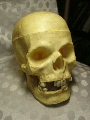 Vintage Human Medical Skull Replica Teaching Simulation Model Life Size