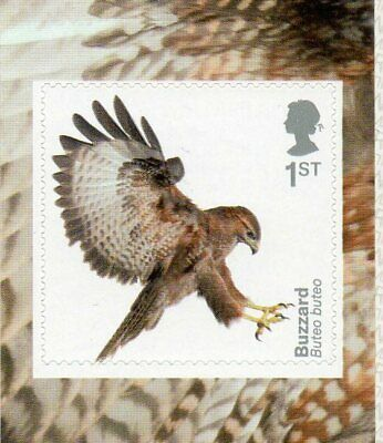 GB QE II 2019 S/A Birds of Prey booklet stamp Buzzard MNH