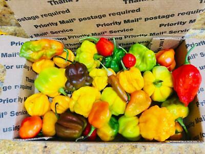 Usps Small Flat Rate Box Of Freshly Picked Hot Peppers - Free Shipping
