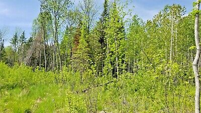 10 Acres Forested Northern Minnesota County Road Electric Borders State Fore