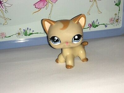 Pet Shop Chat Cat Européen #  Shorthair LPS Littlest Petshop