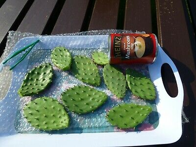 100g Mixed Tortoise & Reptile Food, Opuntia Humifusa, Prickly Pear Cactus Pad
