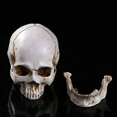 White Resin Simulation Replica Realistic Human Skull Gothic Halloween Decor NP2Z