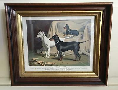 English Terriers Book of the Dog Chromolithograph London 1881 Period Framed