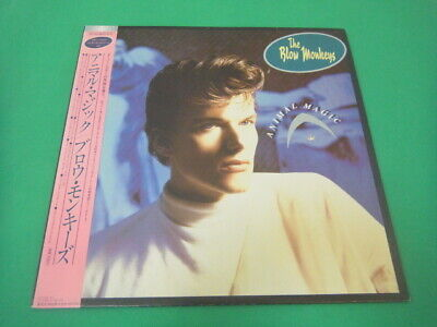 the blow monkeys  /  ANIMAL MAGIC  RPL-8343  with OBI JAPAN LP
