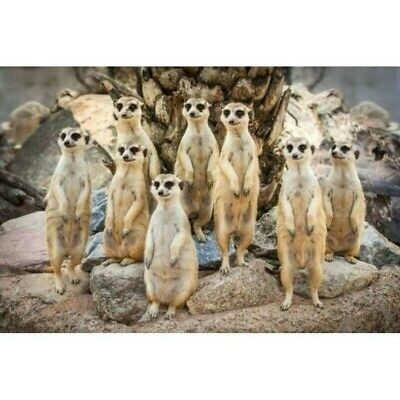 5D Meerkat Family Diamond Painting Full Drill Crafts Kits Embroidery Decors UK